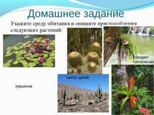 Домашнее задание Укажите среду обитания и опишите приспособления следующих ра