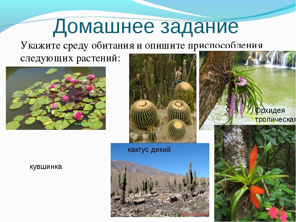 Домашнее задание Укажите среду обитания и опишите приспособления следующих ра...