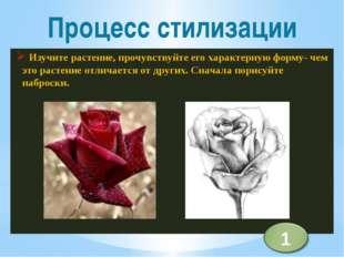 Изучите растение, прочувствуйте его характерную форму- чем это растение отли
