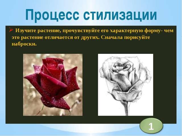Изучите растение, прочувствуйте его характерную форму- чем это растение отли...