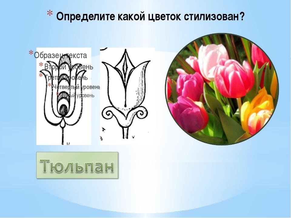 Определите какой цветок стилизован?