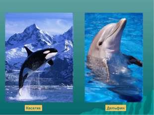 Касатка Дельфин