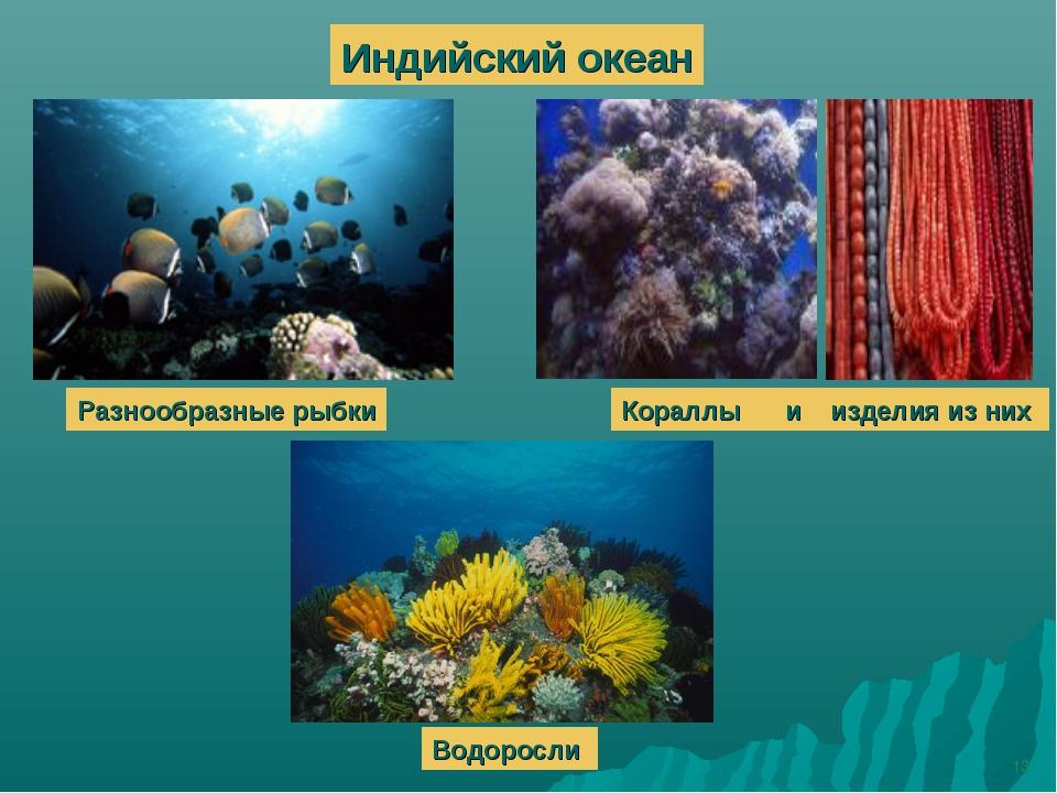 * Индийский океан Разнообразные рыбки Кораллы и изделия из них Водоросли