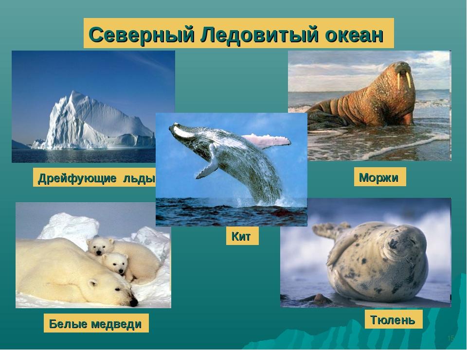 * Северный Ледовитый океан Дрейфующие льды Моржи Белые медведи Тюлень Кит