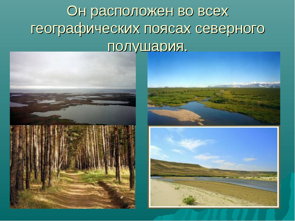 Он расположен во всех географических поясах северного полушария.