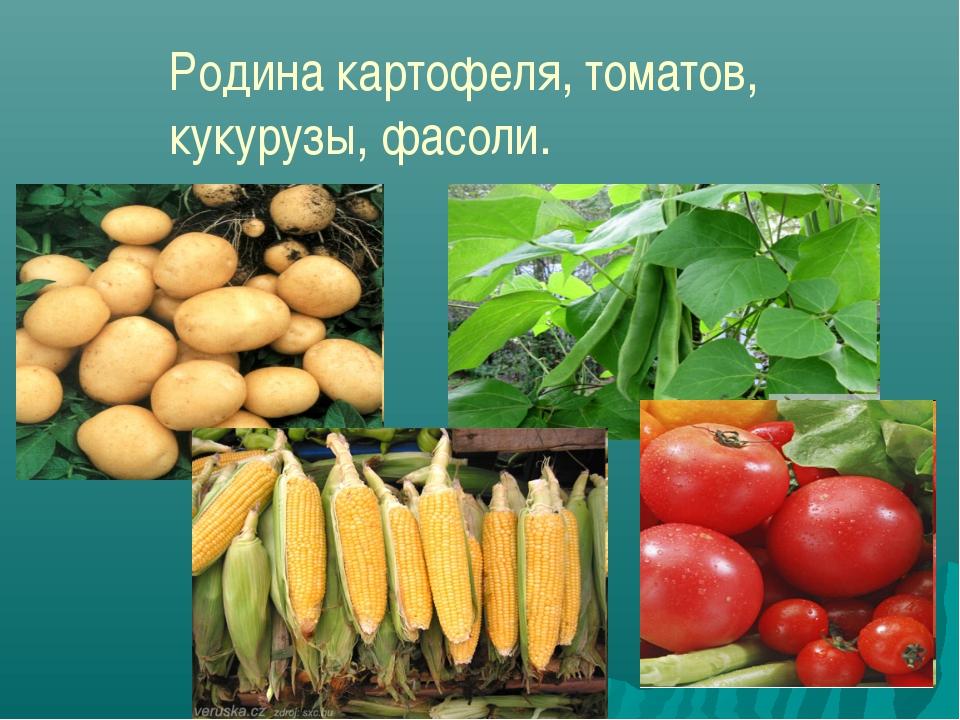 Родина картофеля, томатов, кукурузы, фасоли.