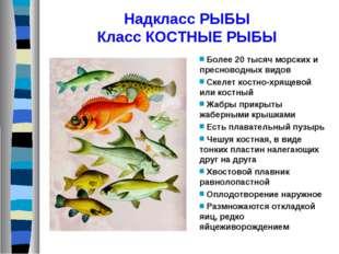 Надкласс РЫБЫ Класс КОСТНЫЕ РЫБЫ Более 20 тысяч морских и пресноводных видов