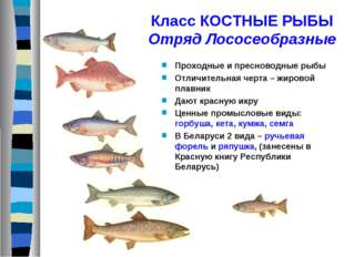 Класс КОСТНЫЕ РЫБЫ Отряд Лососеобразные Проходные и пресноводные рыбы Отличит