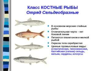 Класс КОСТНЫЕ РЫБЫ Отряд Сельдеобразные В основном морские стайные рыбы Отлич