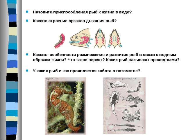 Назовите приспособления рыб к жизни в воде? Каковы особенности размножения и...