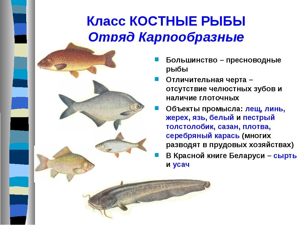 Класс КОСТНЫЕ РЫБЫ Отряд Карпообразные Большинство – пресноводные рыбы Отличи...