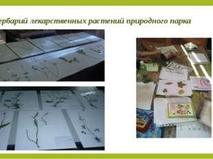 Гербарий лекарственных растений природного парка