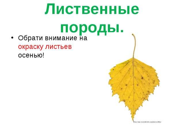 Лиственные породы. Обрати внимание на окраску листьев осенью!