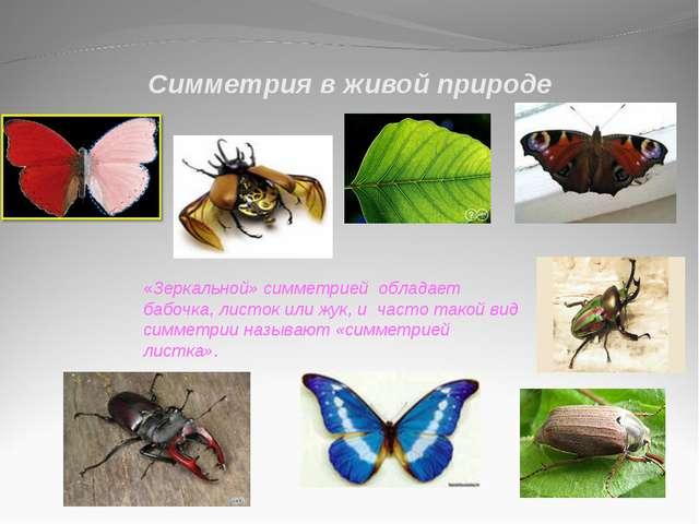 Симметрия в живой природе «Зеркальной» симметрией обладает бабочка, листок ил...