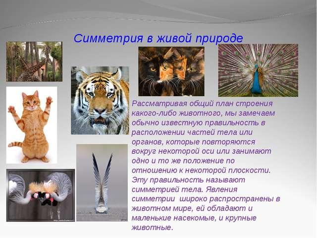 Симметрия в живой природе Рассматривая общий план строения какого-либо животн...