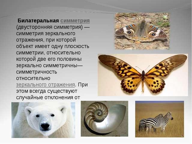 Билатеральная симметрия (двусторонняя симметрия)— симметрия зеркального отр...