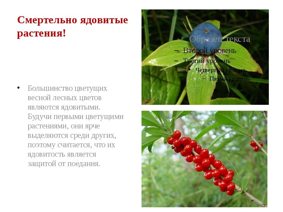 Смертельно ядовитые растения! Большинство цветущих весной лесных цветов явля...
