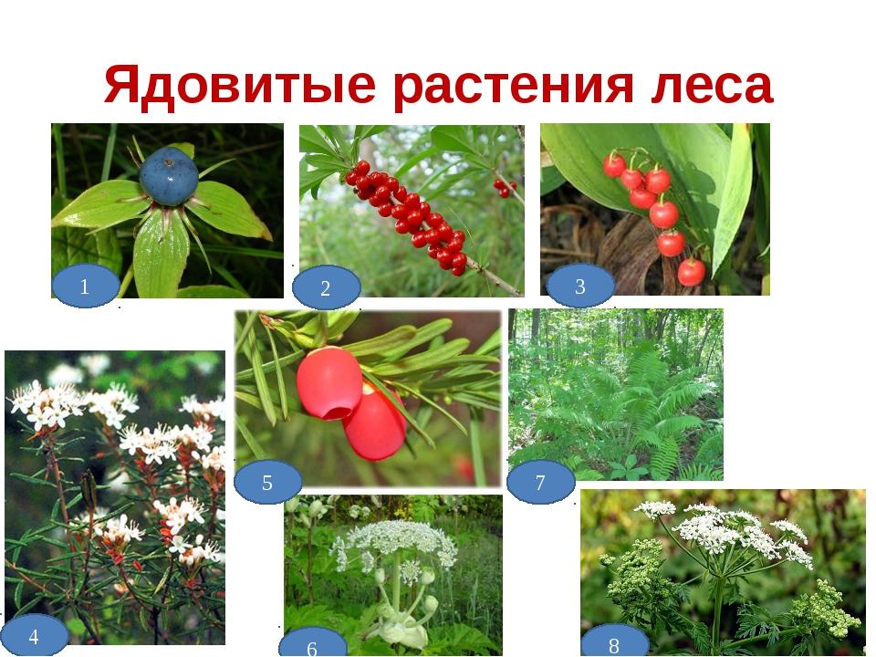 Ядовитые растения леса 1 2 3 5 4 6 7 8