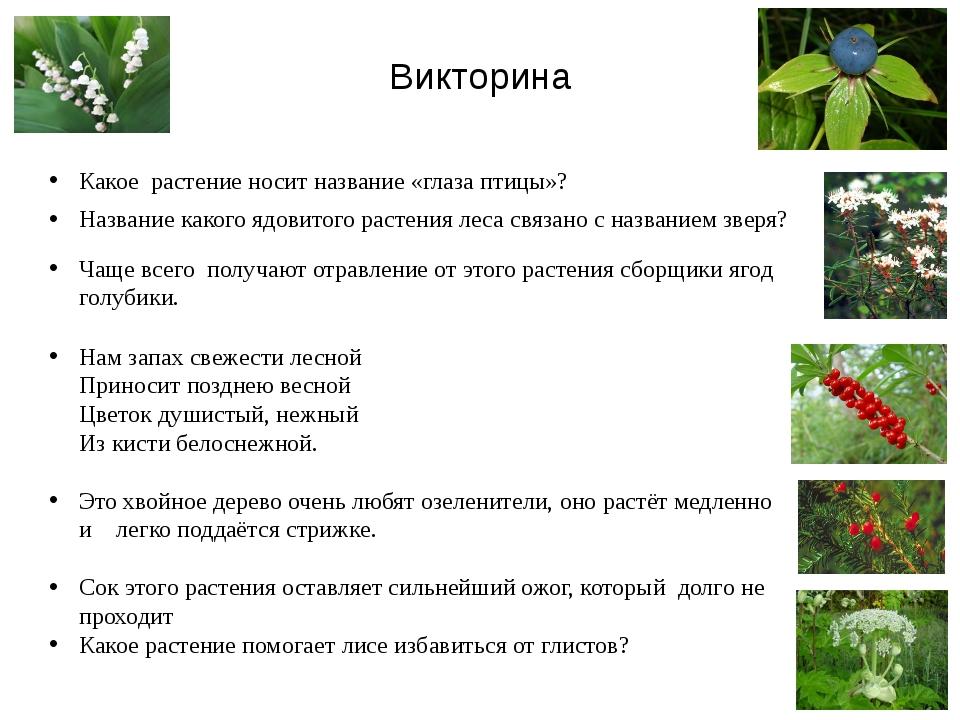 Викторина Какое растение носит название «глаза птицы»? Название какого ядовит...