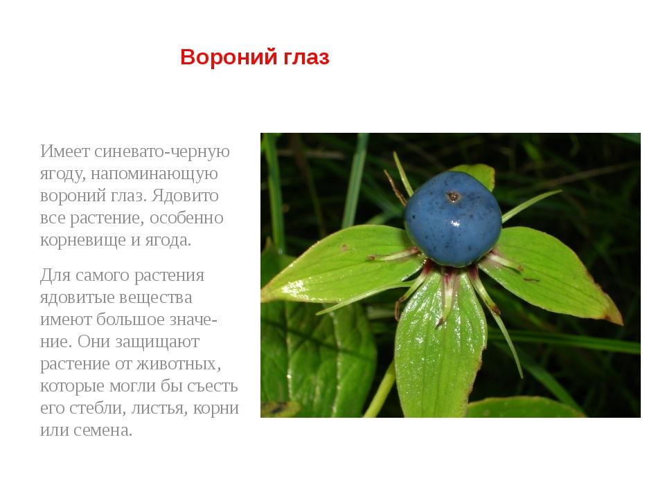 Вороний глаз Имеет синевато-черную ягоду, напоминающую вороний глаз. Ядовито...