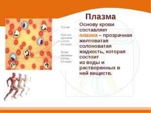Плазма Основу крови составляет плазма – прозрачная желтоватая солоноватая жид