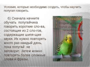 Условия, которые необходимо создать, чтобы научить попугая говорить. 6) Снача