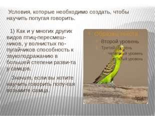 Условия, которые необходимо создать, чтобы научить попугая говорить. 1) Как
