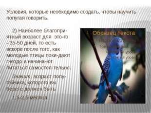 Условия, которые необходимо создать, чтобы научить попугая говорить. 2) Наибо