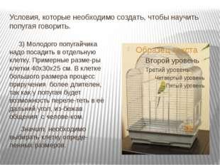 Условия, которые необходимо создать, чтобы научить попугая говорить. 3) Молод