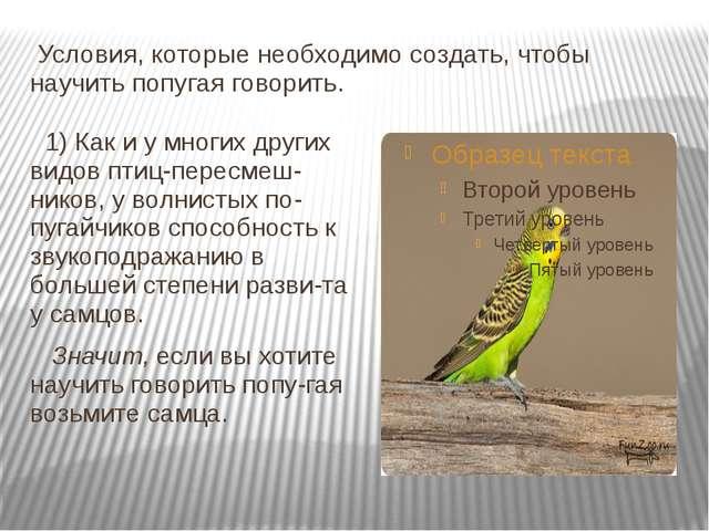 Условия, которые необходимо создать, чтобы научить попугая говорить. 1) Как...