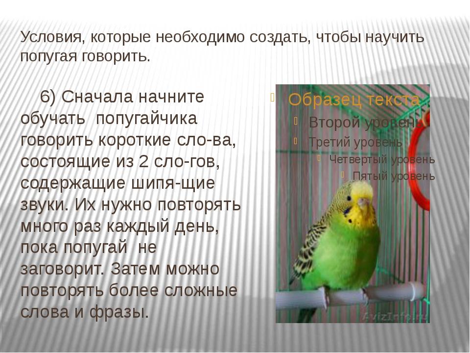 Условия, которые необходимо создать, чтобы научить попугая говорить. 6) Снача...