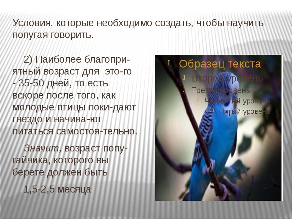 Условия, которые необходимо создать, чтобы научить попугая говорить. 2) Наибо...