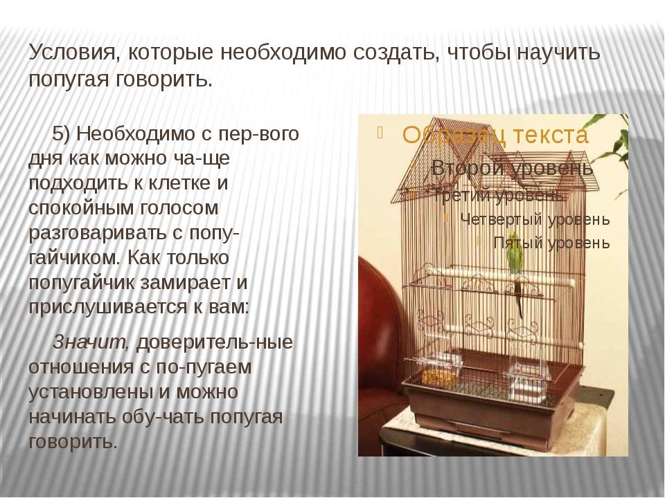 Условия, которые необходимо создать, чтобы научить попугая говорить. 5) Необх...