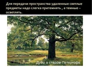 Дождь в дубовом лесу Дубы в старом Петергофе  Дубы в старом Петергофе