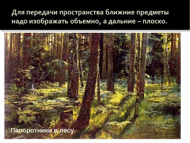 Сестрорецкий бор Папоротники в лесу Папоротники в лесу.