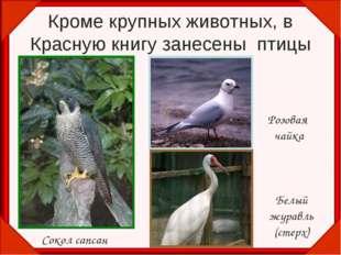 Кроме крупных животных, в Красную книгу занесены птицы Сокол сапсан Розовая ч
