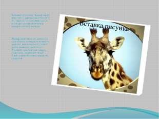"""Забавный ростомер """"Жираф"""" своей яркостью и оригинальностью сразу же обращает"""