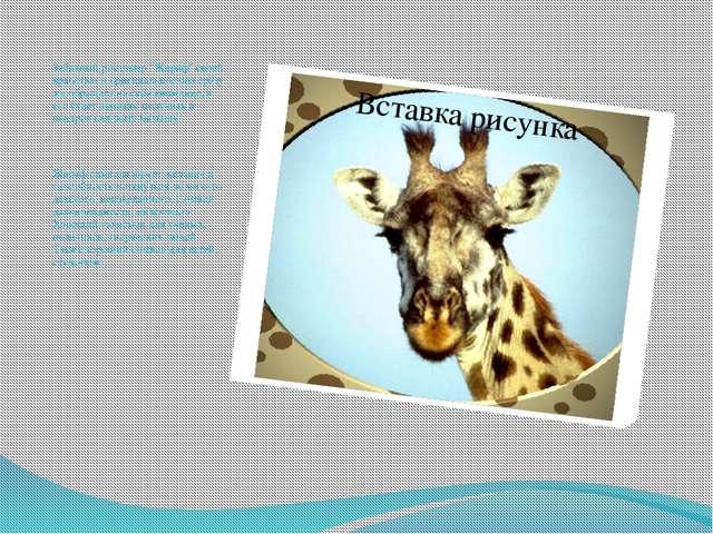 """Забавный ростомер """"Жираф"""" своей яркостью и оригинальностью сразу же обращает..."""