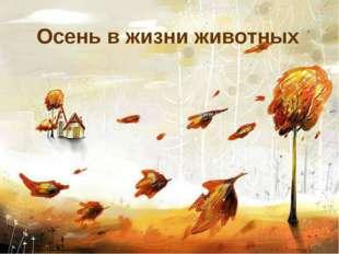 Осень в жизни животных