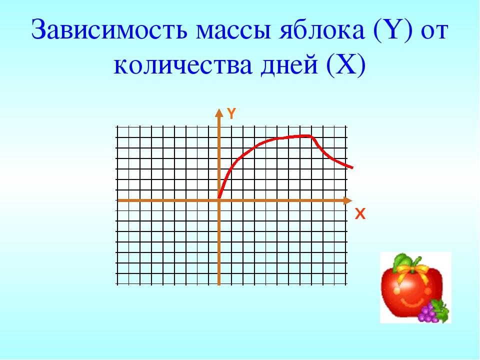 Зависимость массы яблока (Y) от количества дней (X)
