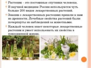 Растения – это постоянные спутники человека. В научной медицине России исполь