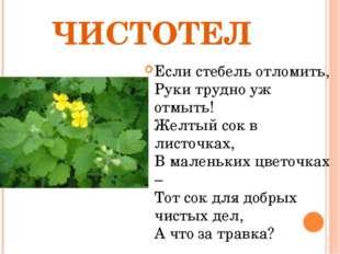 ЧИСТОТЕЛ Если стебель отломить, Руки трудно уж отмыть! Желтый сок в листочках