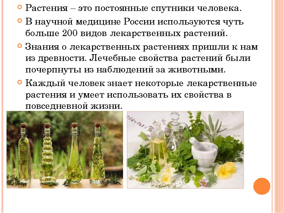 Растения – это постоянные спутники человека. В научной медицине России исполь...