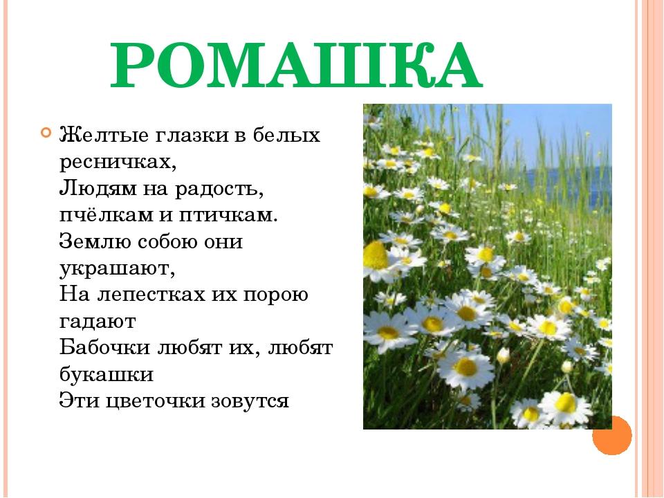 РОМАШКА Желтые глазки в белых ресничках, Людям на радость, пчёлкам и птичкам....
