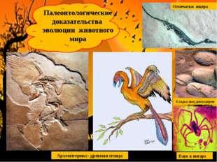 Археоптерикс- древняя птица Палеонтологические доказательства эволюции животн