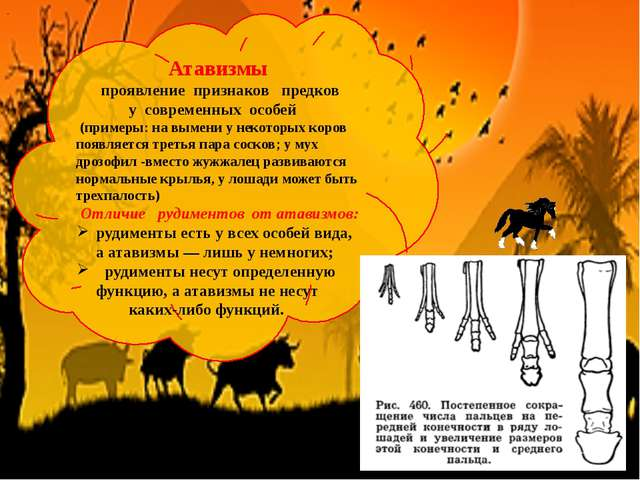 Атавизмы проявление признаков предков у современных особей (примеры: на выме...