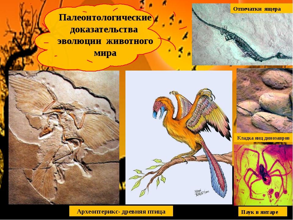 Археоптерикс- древняя птица Палеонтологические доказательства эволюции животн...
