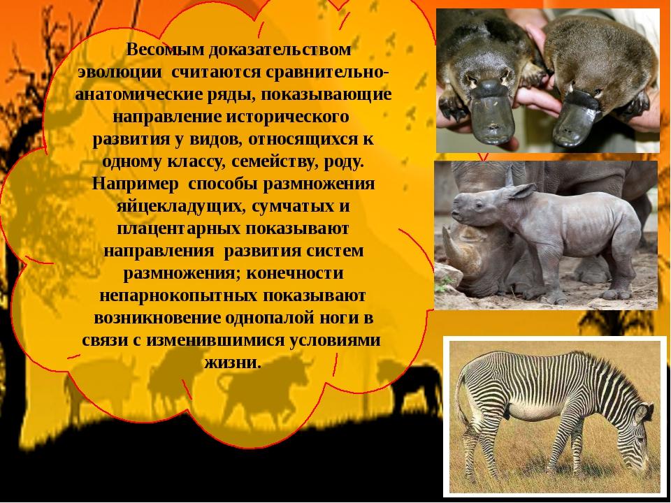 Весомым доказательством эволюции считаются сравнительно-анатомические ряды,...