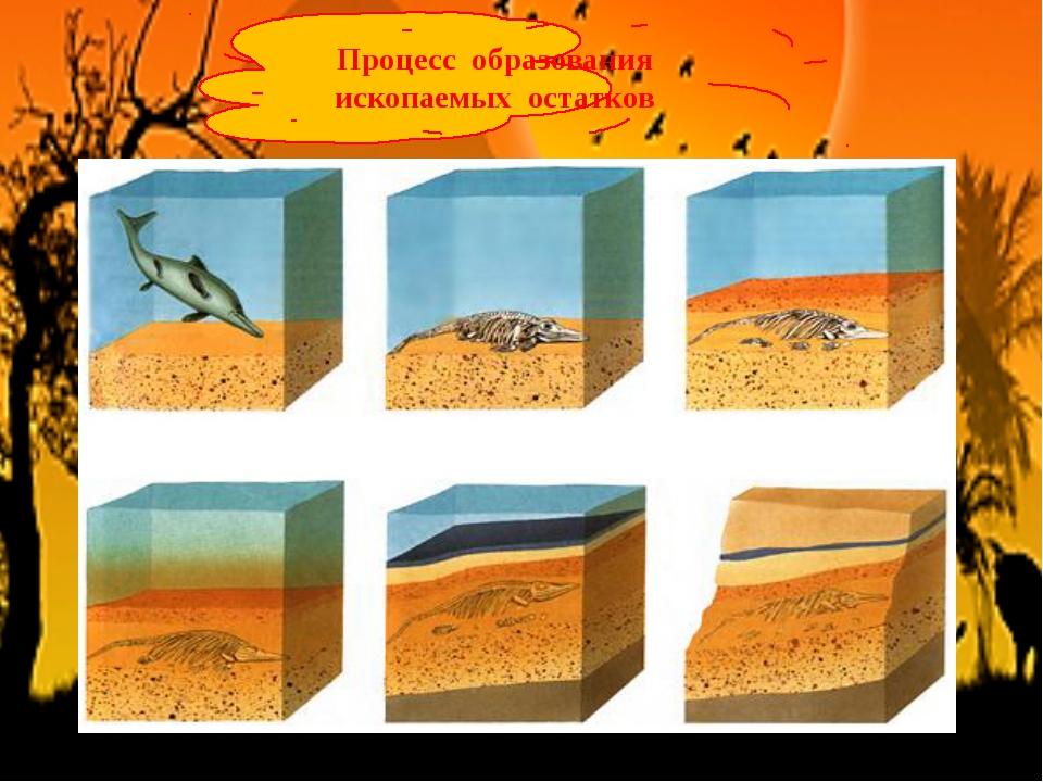 Процесс образования ископаемых остатков