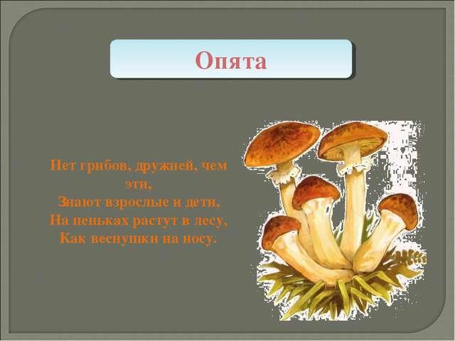 Нет грибов, дружней, чем эти, Знают взрослые и дети, На пеньках растут в лесу...
